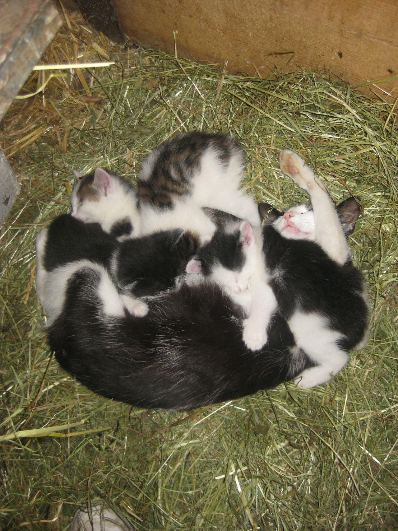 Schlaf im Stroh - Brunnen