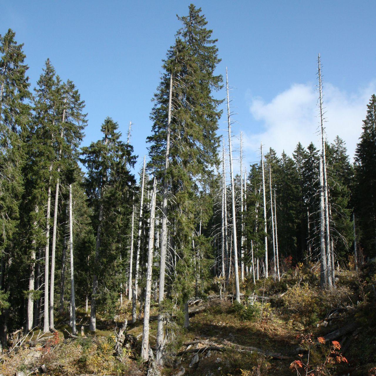 Führungen im und um das Waldreservat Bödmeren