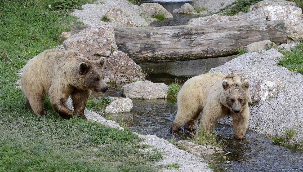 Bären im Natur- und Tierpark Goldau