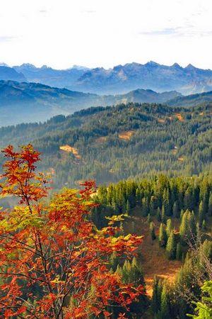 Wander-Kombi «Moorwälder Ibergeregg»
