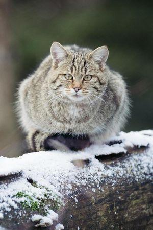 Natur- und Tierpark im Winter
