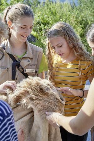 NMG 2.1 & NMG 2.4 & - NMG 2.6 - Natur- und Tierpark Goldau