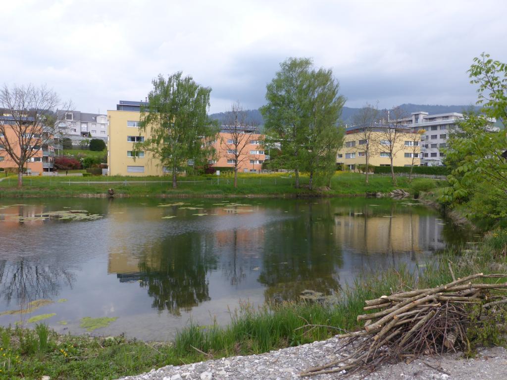 Rundweg Freyenweiher - Krebsbach